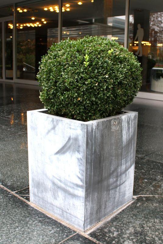 Jardiniere en zinc et son buis boulle denviron 50 cmdim 60 - Jardiniere en zinc ...
