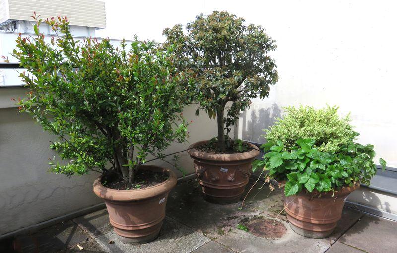 3 plantes dexterieur en pot rond dont 1 de 60 cm de for Plante 70 cm