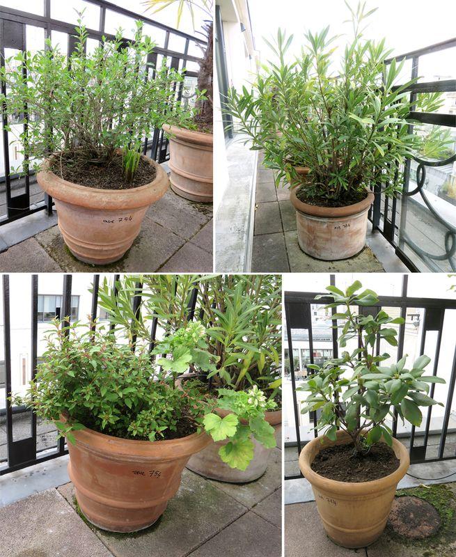 4 plantes dexterieur en pot rond dont 2 de 50 cm de diametre par 38 cm de haut hauteur des plantes. Black Bedroom Furniture Sets. Home Design Ideas