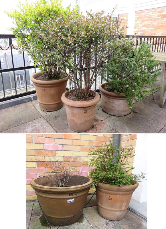 plantes exterieur terrasse les plantes pot fleurs ext rieur terrasse soleilla cm riviera pot. Black Bedroom Furniture Sets. Home Design Ideas