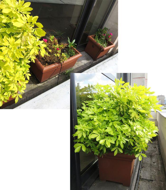 3 plantes dexterieur en pot rectangulaire dont 2 de 33 cm de haut par 50 de large par 43 cm de prof. Black Bedroom Furniture Sets. Home Design Ideas