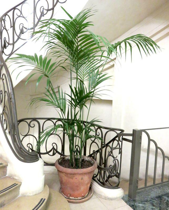 1 plante dinterieur en pot rond de 60 cm de diametre par for Plante 60 cm