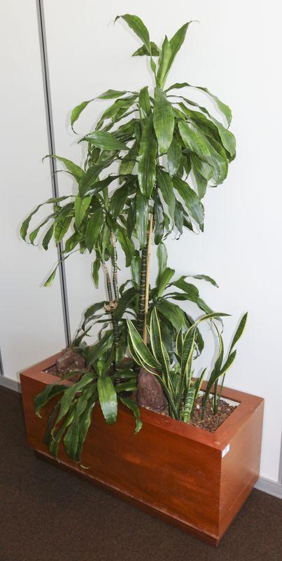 Plantes vertes dinterieur type dracaena et sansevieria for Bac plantes interieur design