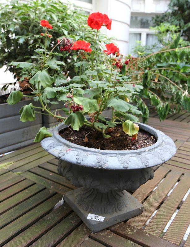 5 petits vases medicis en resine laque vert contenant des geraniums hauteur du pot 30 cm terrasse 1. Black Bedroom Furniture Sets. Home Design Ideas
