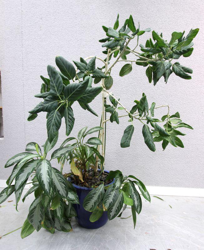 Composition de plantes vertes dinterieur cache pot de for Acheter des plantes vertes